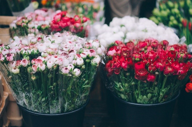 FLOWERS AND PLANTS TO GROW FOR VALENTINE'S DAY